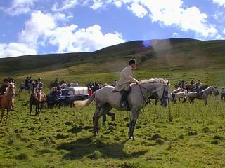 showing castle hill escort